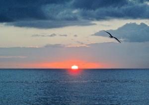 Happy Wednesday Boca Raton!  Photo Courtesy Rick Alovis