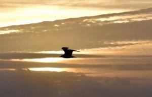 Morning Flight - Happy Tuesday - Photo Courtesy Rick Alovis