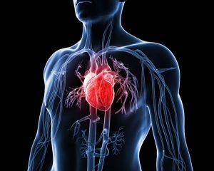 1401-heart-terms-art