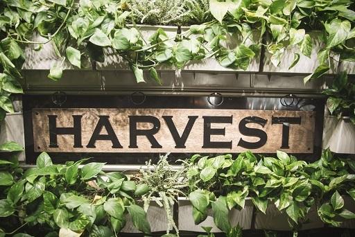 Harvest Seasonal Grill & Wine Bar introduces new Spring Menu - Boca ...